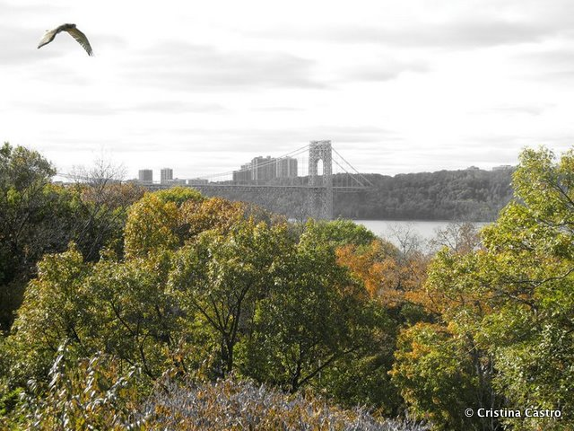 Find the Great Outdoors Without Leaving Manhattan: Fort Tryon Park & Inwood Park
