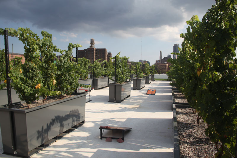 Rooftop-Reds-Vineyard-NYC_Untapped-Cities1